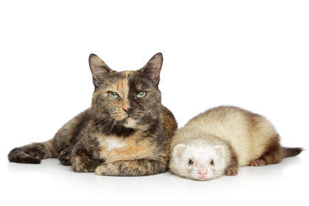 brindled: Cat and ferret lying on a white background Stock Photo