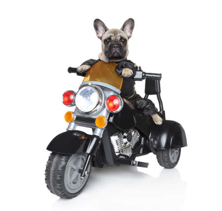 Dog riding on a black police motorcycle photo