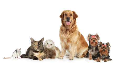 Group of pets posing on white background