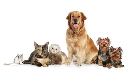 Gruppe von Haustieren posiert auf weißem Hintergrund Standard-Bild