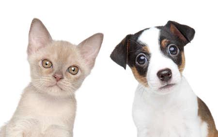 子猫と子犬一緒にクローズ アップの肖像画ホワイト バック グラウンド