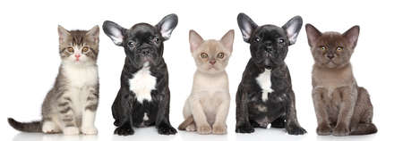 Group of puppies and kittens on a white background photo