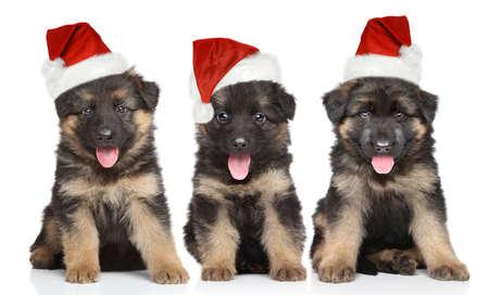 흰색 배경에 빨간 산타 모자에 독일 셰퍼드 강아지
