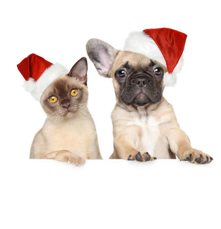 Portrait of a cat and dog in Christmas red hat on a white banner photo
