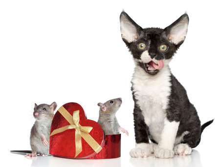 Cat and gift with mice on white background photo