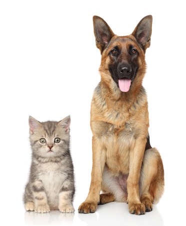 Dog and kitten together on a white background photo