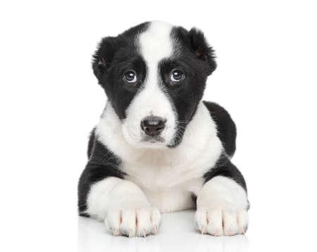 alabai: Central asian shepherd puppy on white