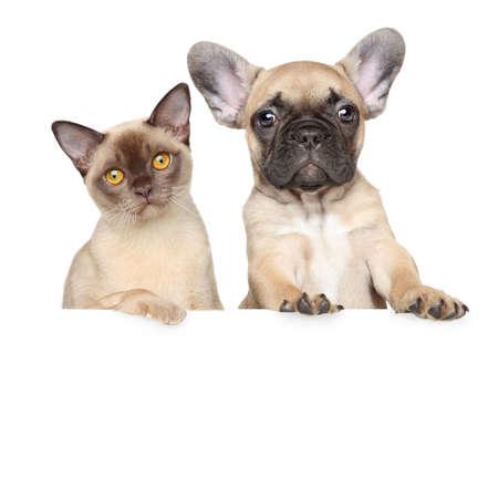 흰색 배너에 고양이와 강아지의 근접 초상화