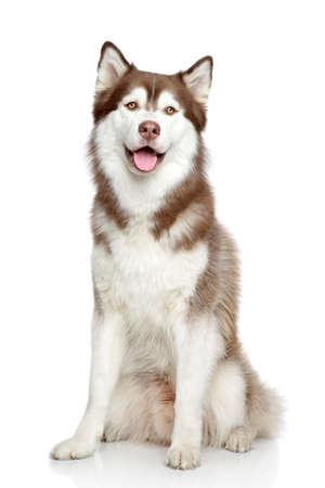 幸せな犬、白い背景の上のスタジオ ポートレート