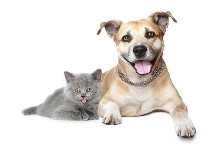 猫と犬の肖像画。白い背景に分離