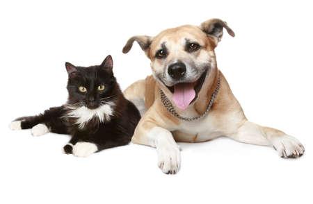 猫と白い背景の分離された犬のクローズ アップの肖像画