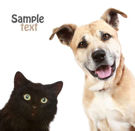 gardian: Close-up portrait of a cat and dog  Isolated on white background