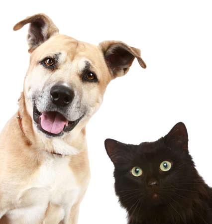 猫と犬は、白い背景で隔離のクローズ アップの肖像画