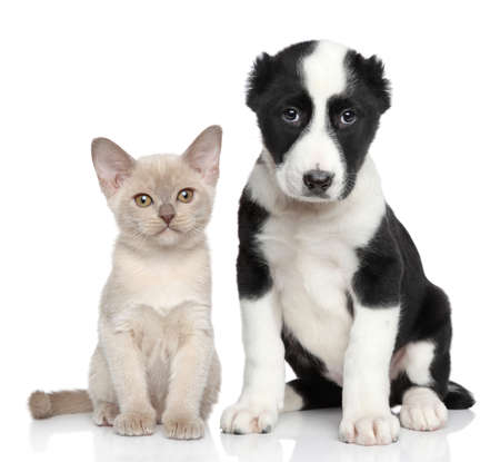 Kitten and puppy together posing on a white background photo