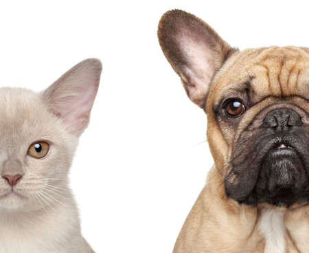 pug dog: Cat and Dog  Half of muzzle close-up portrait isolated on white background