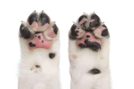 alabai: Dog paws on a white background, isolated