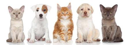 白の背景には小さな子猫と子犬のグループ