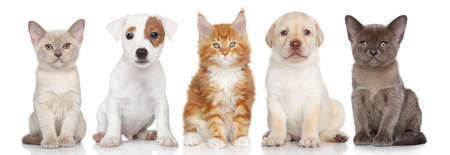 Group of small kitten and puppies are on white background Standard-Bild