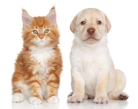 子猫と白い背景の子犬