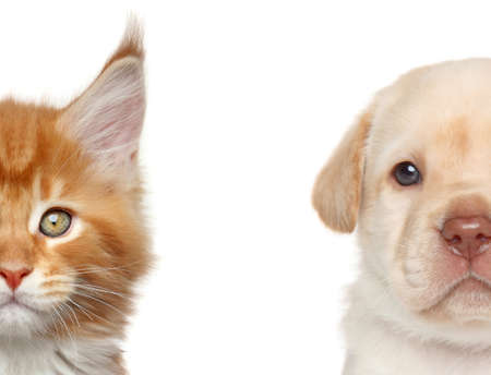 Kitten and puppy. Half of muzzle close-up portrait on a white background 스톡 콘텐츠