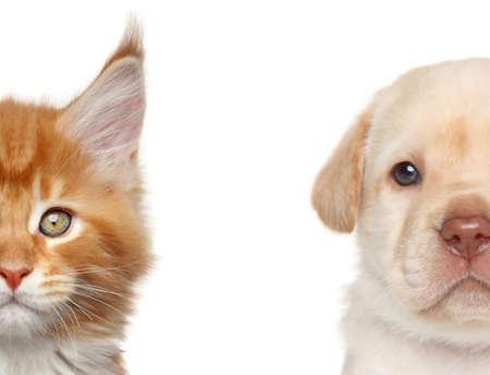 Kitten and puppy. Half of muzzle close-up portrait on a white background Standard-Bild