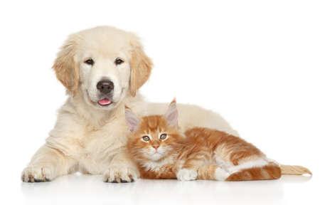 dog: 흰색 배경에 포즈 골든 리트리버 강아지와 새끼 고양이. 고양이와 개 시리즈