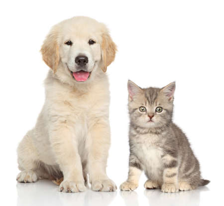 Cat and dog together in front of white background photo