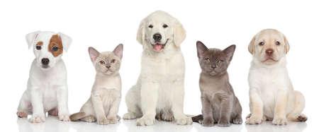 白地に小さな子猫と子犬のグループ 写真素材