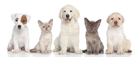 Group of small kitten and puppies are on white background Stockfoto