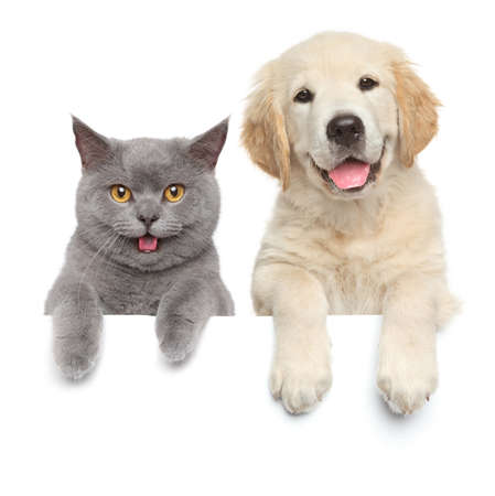 white card: Cat and dog over white banner Stock Photo