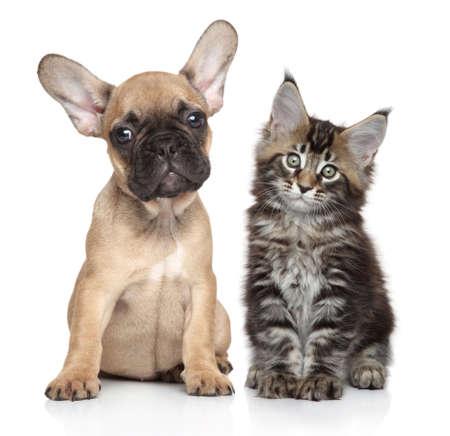 フレンチ ブルドッグと子猫を一緒にポーズ ホワイト バック グラウンド