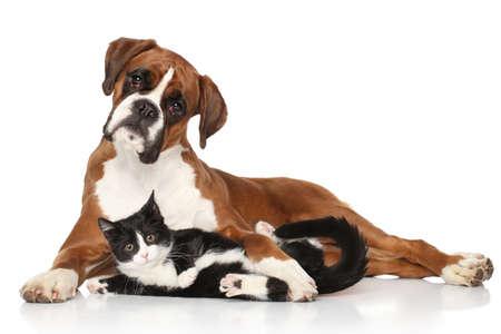 boxer dog: Gato y perro juntos tirado en el suelo Foto de archivo