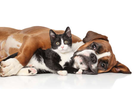 Close-up cat and dog together lying on the floor Foto de archivo