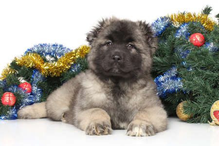 alabai: Central Asian Shepherd puppy on the background of decorated Christmas tree