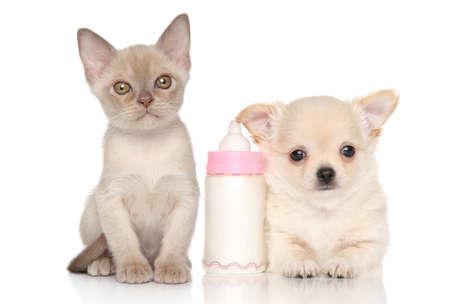 흰색 배경에 새끼 고양이와 아기 병 근처 강아지