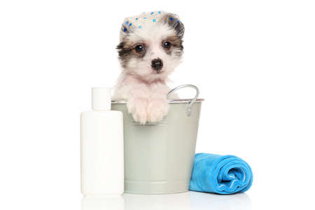 asia nude: Chinese crested puppy sitting in the bath bucket near the shampoo and towel Stock Photo
