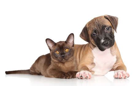Puppy and kitten lying down on a white background