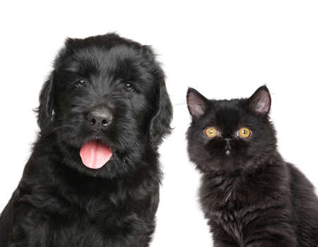 animals together: Cat and dog together isolated on white background Stock Photo