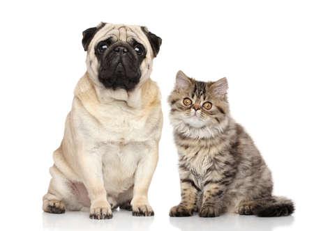 白い背景の上に一緒に犬と猫