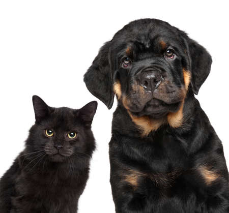 rotweiler: Cat and dog series. Close-up isolated on white background