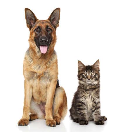 고양이 개는 흰색 배경 앞에 함께 스톡 콘텐츠