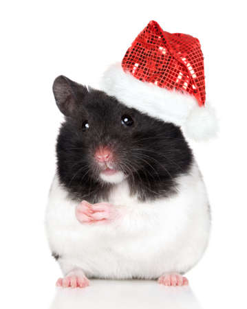 Hamster in Santa red hat. Close-up portrait on white background