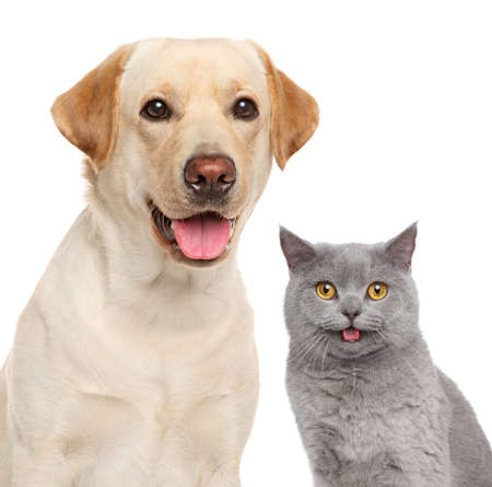 white dog: Cat and dog together. Close-up portrait isolated on white Stock Photo