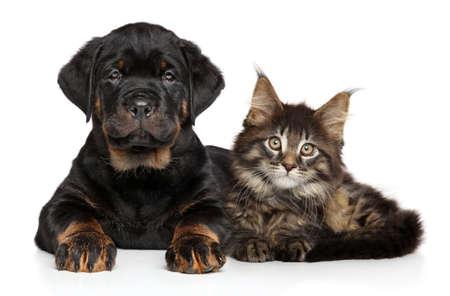 함께 누워있는 강아지와 새끼 고양이 스톡 콘텐츠