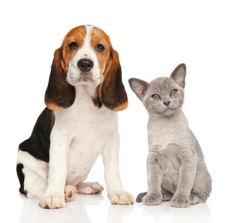 강아지와 새끼 고양이 함께. 흰색 배경에 초상화 스톡 콘텐츠