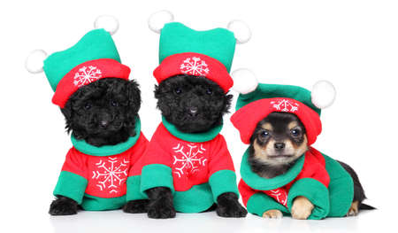 Group of puppies in Christmas costumes posing on white background