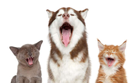 Group of pets sing song. Theme cats and dogs. Portrait on white background. Archivio Fotografico