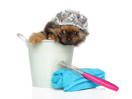 Spitz puppy sitting in a bath bucket and cap, Bath theme, Funny portrait on white background