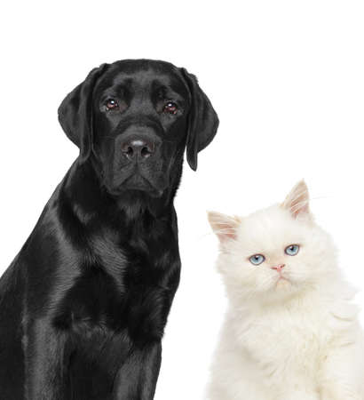Cat and dog together, Close-up portrait isolated on a white background Stock Photo
