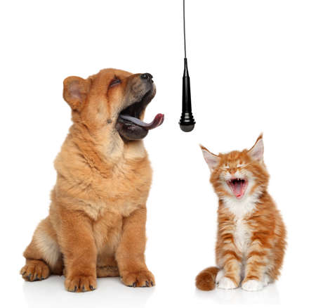 Singing puppy and kitten isolated on white background concept Фото со стока
